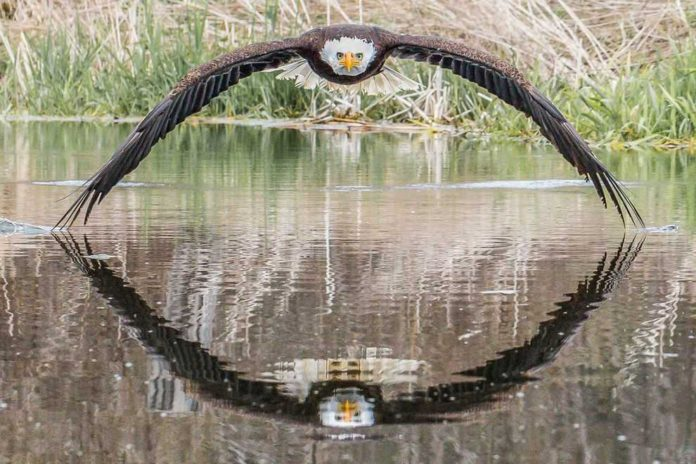 eagle in symmetrical reflection