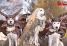 gameofbones-dogs